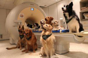 13 cani addestrati per l'esperimento